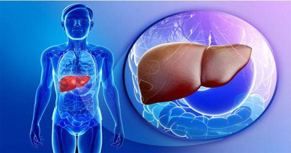 Researchers Predict Widespread Fatty Liver Disease