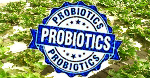 How Probiotics & Prebiotics Keep the Microbes in Your Gut Healthy