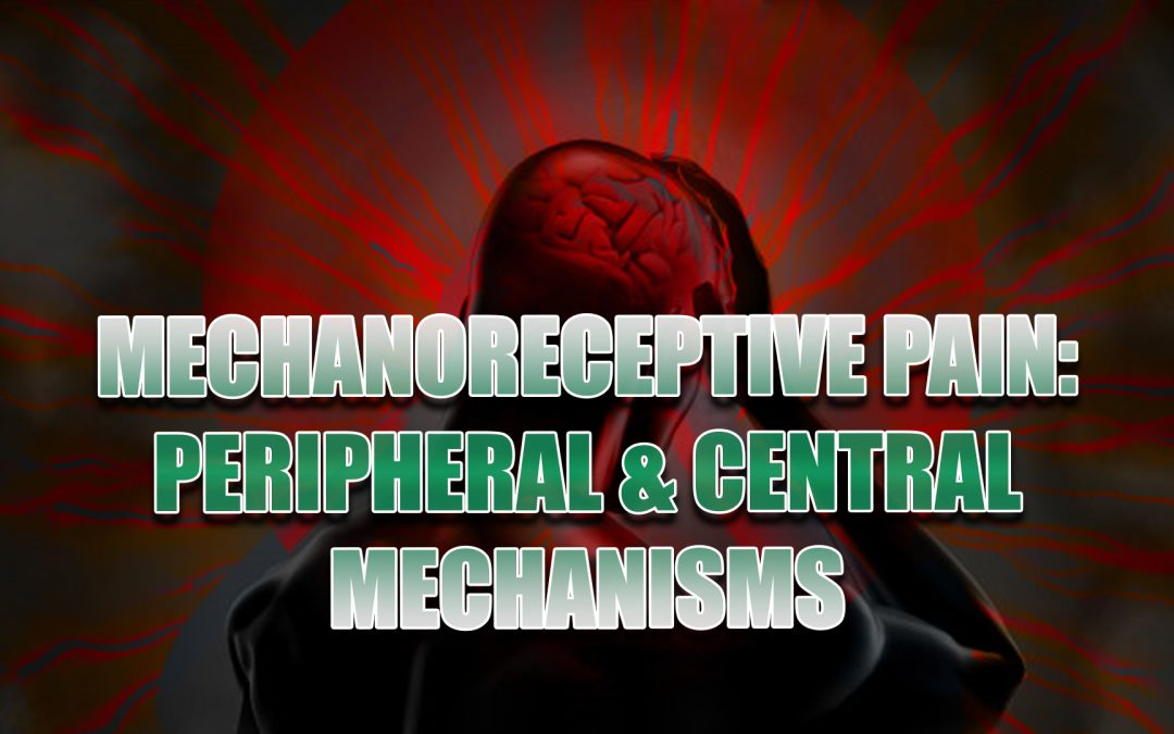 MechanoReceptive Pain: Peripheral And Central Mechanisms