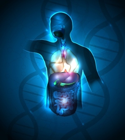 endocrinesystemhormones-dbdc89d6