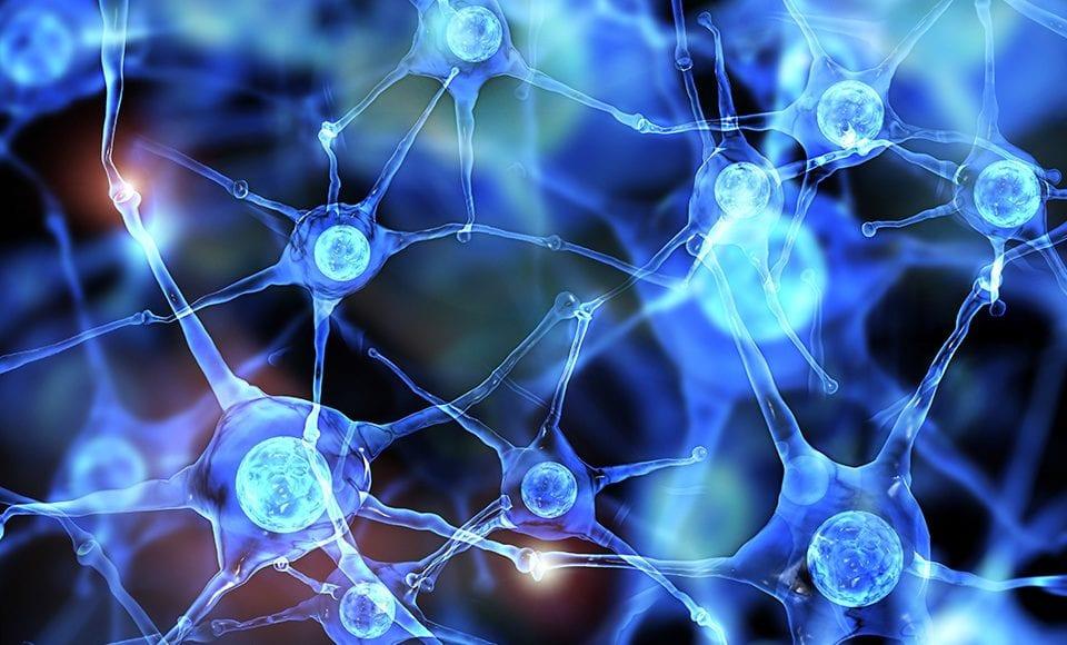 Functional Neurology: Differences Between Dopamine and Serotonin   El Paso, TX Chiropractor