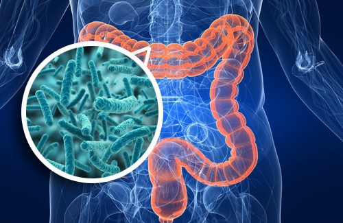 bifidobacterias di usus